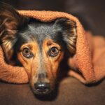10 Biggest Dog Fears: What Are Dogs Afraid Of?