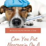 Can You Put Neosporin On A Dog Wound? [2020]
