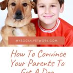 How To Convince Your Parents To Get A Dog [2020]