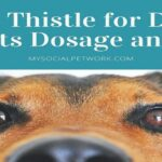Milk Thistle for Dogs: Benefits and Uses