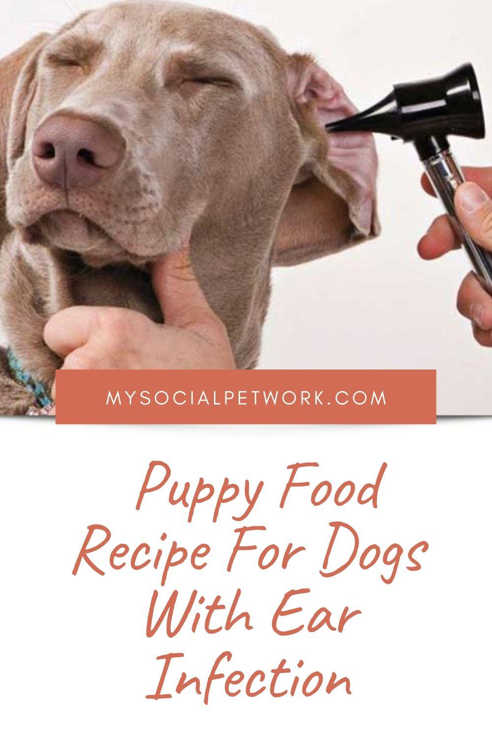 puppy-food-recipe-for-dogs-with-ear-infection-7317434