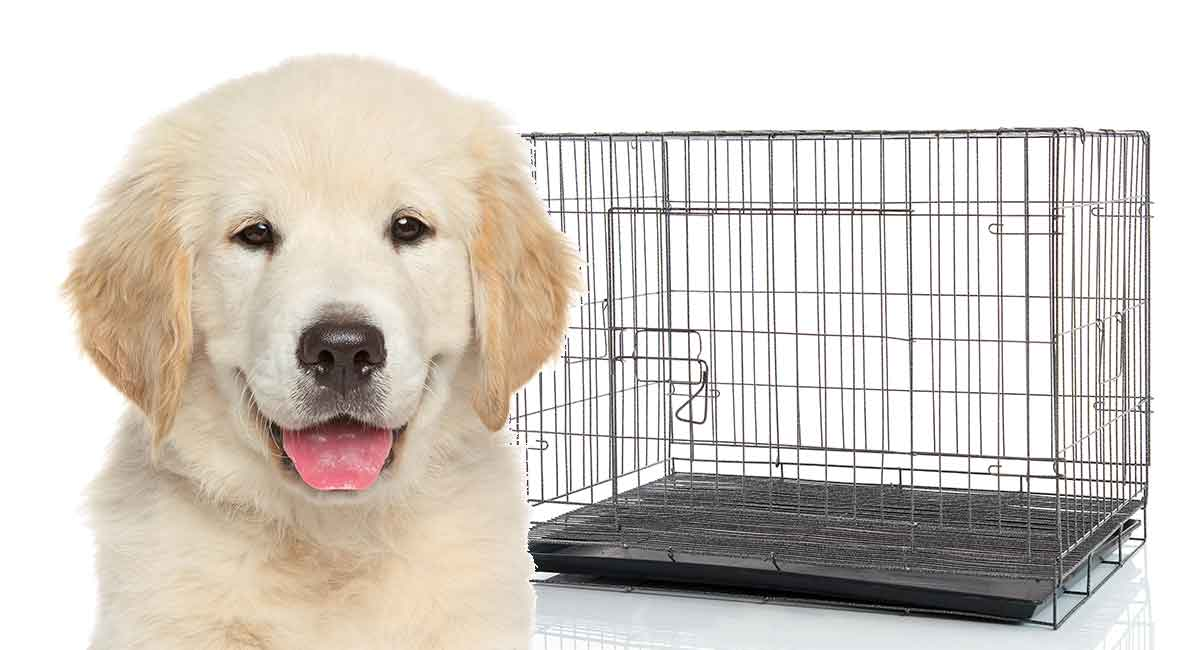 puppy-keeps-peeing-in-crate-3566746