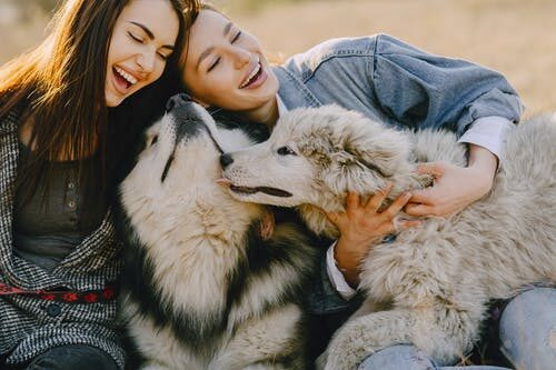 tips-to-build-a-good-bond-with-your-dog-4218289-5559685