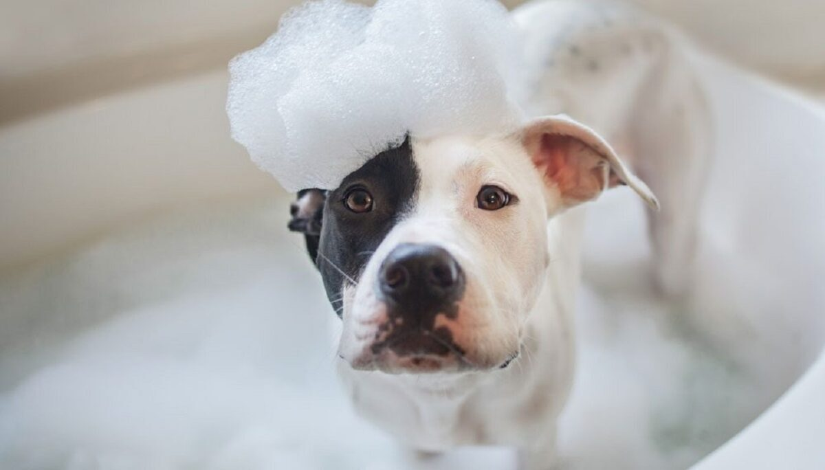 which-shampoo-is-suitable-for-dogs-e1591490257648-3507721-2094107