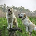 Dominance in dogs: is my dog ​​dominant?