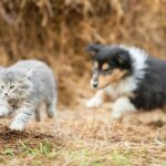 Teaching your dog not to run after cats (chasing)