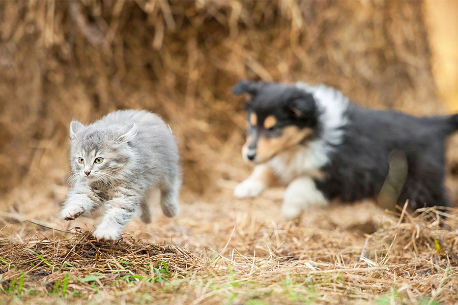 teaching your dog not to run after cats chasing