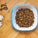 Foods To Avoid When Dog Has Cushings