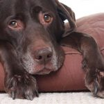 Common Signs of Arthritis in Dogs