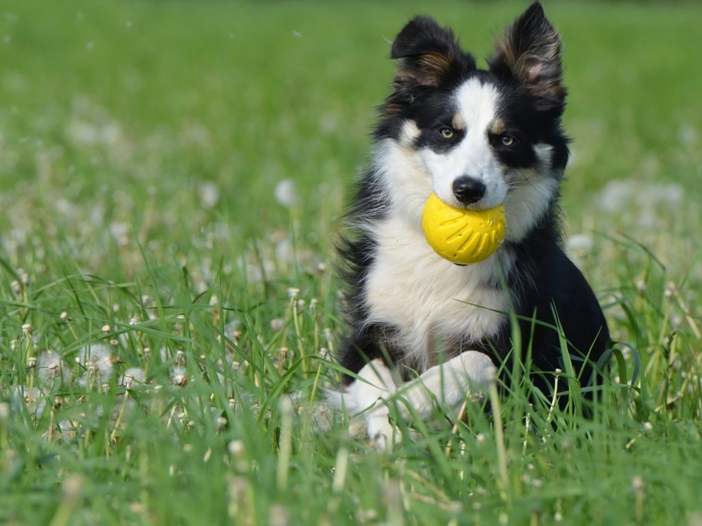 toys are good to prevent bad breath from our dog