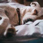 Tips on taking care of a neutered dog